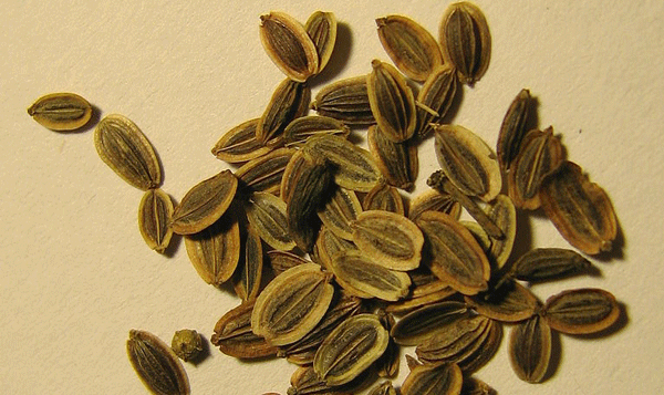 dii_seed